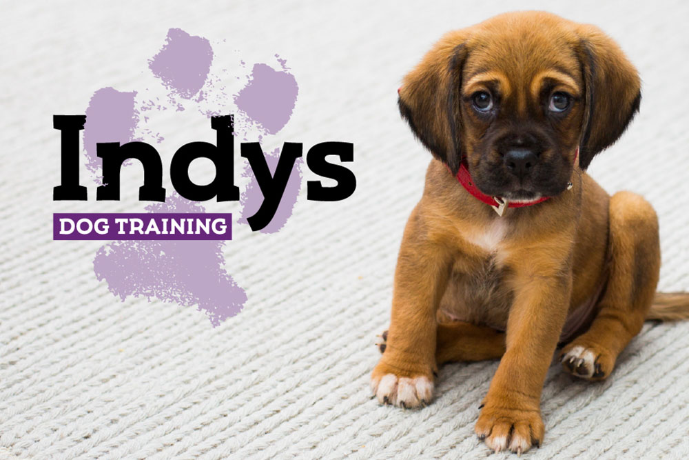 Logo design and photo of a puppy for dog trainer